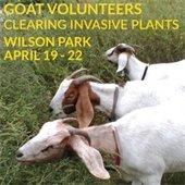 Goat Volunteers